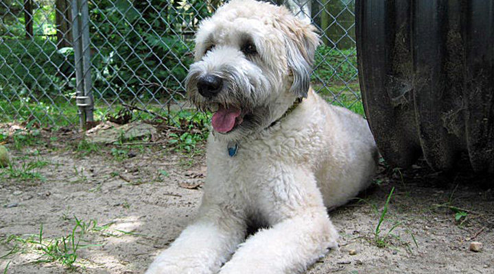 white dog tube